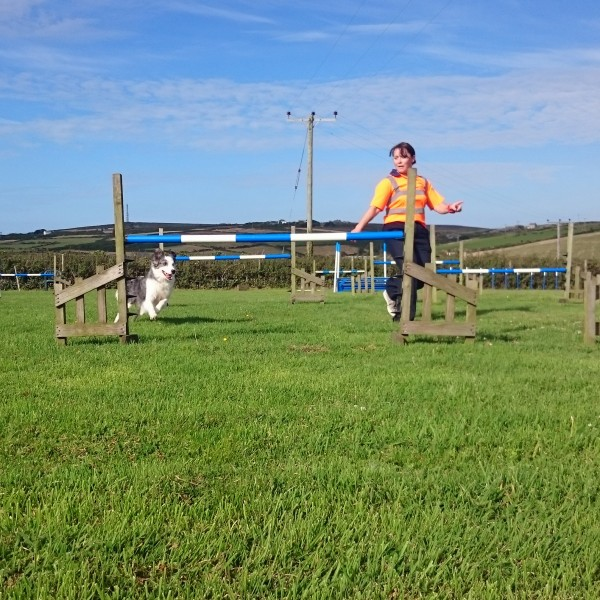 Agility Workshops - Improving Jumping Skills