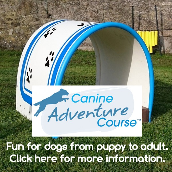 Canine Adventure Workshop