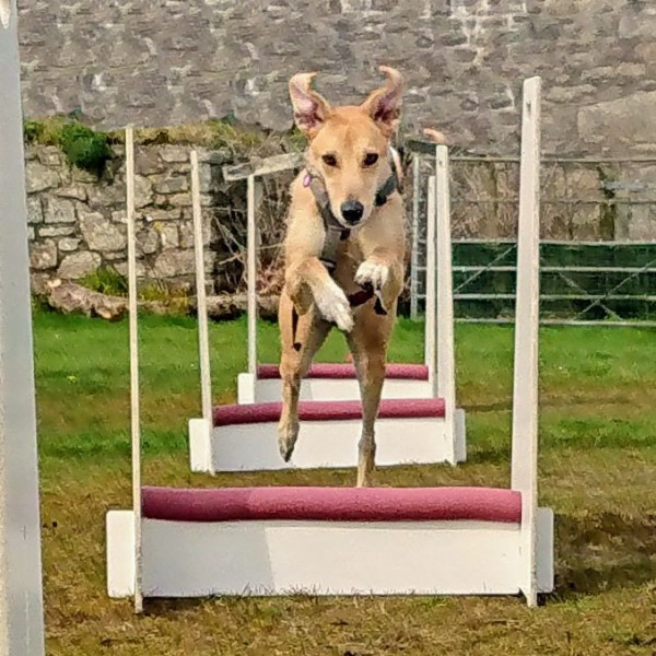 Introduction to Flyball Workshop