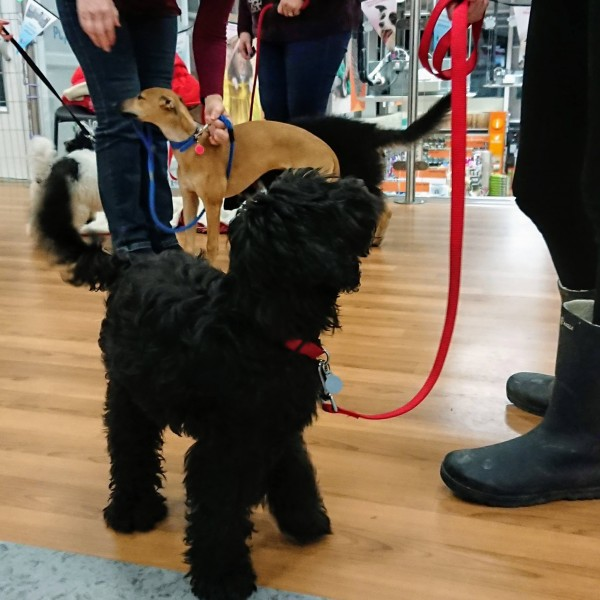 Puppy School Penzance